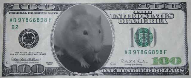 banii lui escobar distrusi de rozatoare