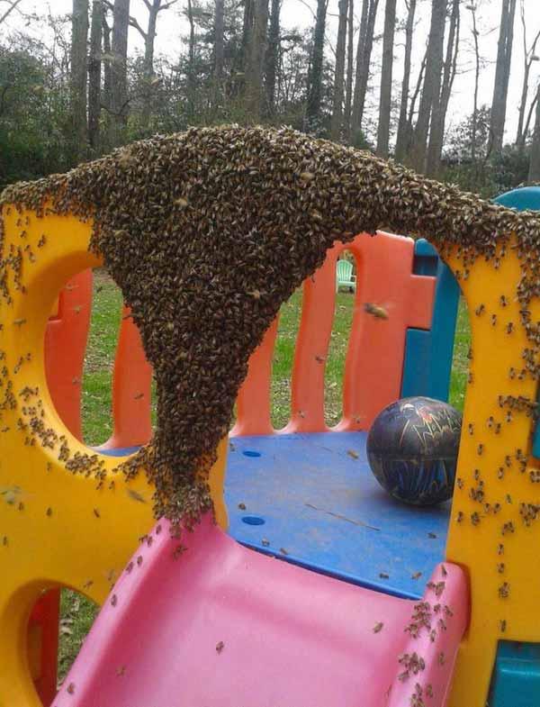 loc de joaca albine