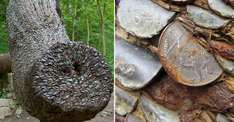 copacul plin cu monede