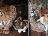 pisică s-a furişat