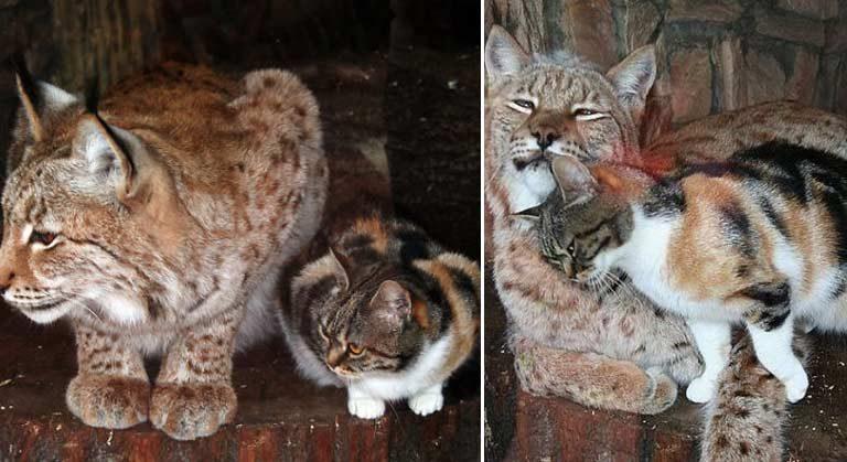 O pisică s-a furişat la Zoo şi s-a împrietenit cu un râs carpatin