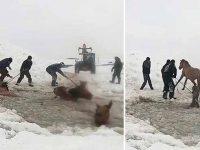 cai căzut într-un lac îngheţat