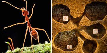 furnicile în cazul epidemiilor