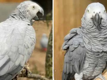 papagali au fost daţi afară de la zoo