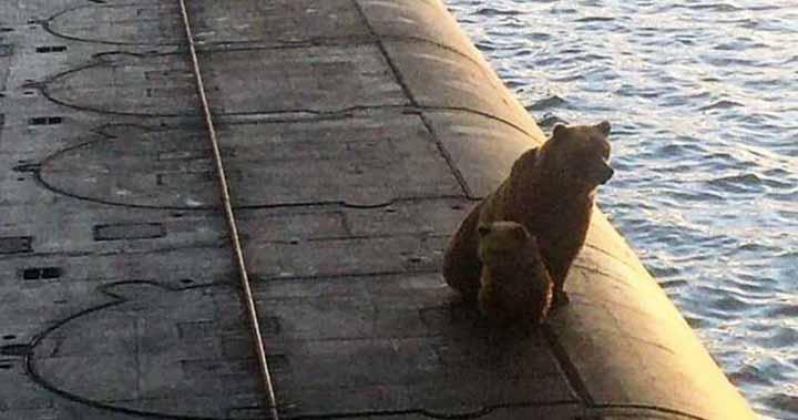 ursoaică şi puiul ei au fost împuşcaţi